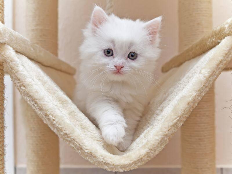 Katzenbabysport auf dem Kratzbaum: Das macht Spaß! – Bild: Shutterstock / Gena96