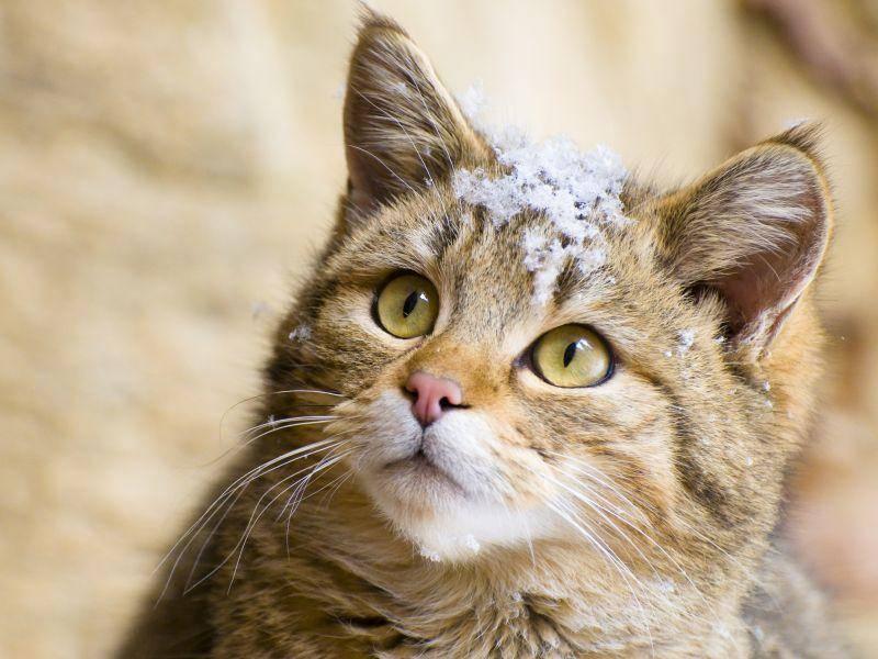 Schneeschnappschuss? Da sagt diese Katze nicht Nein – Bild: Shutterstock / Stefan Simmerl