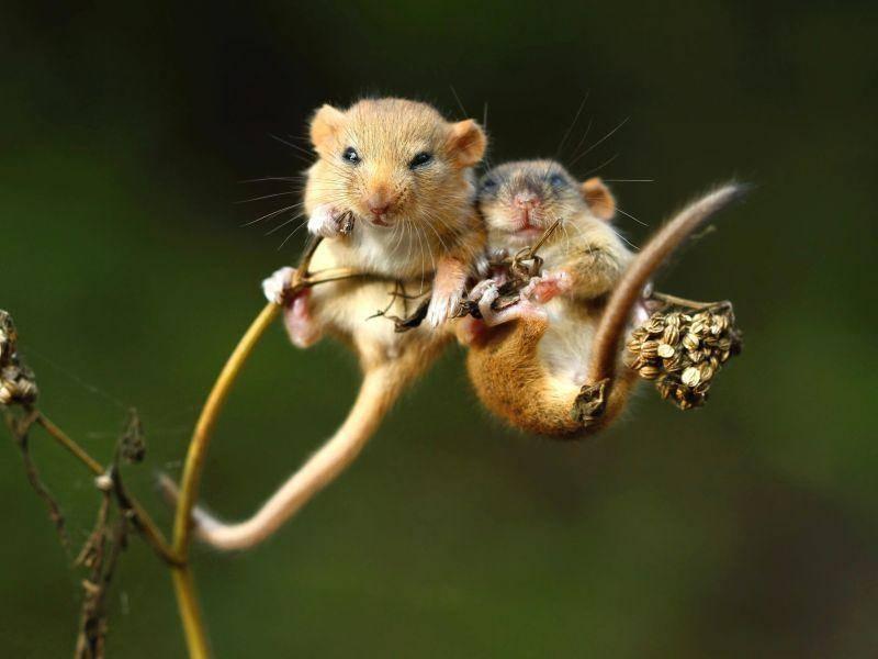 Gut festhalten und dann eine Runde Schaukeln: Viel Spaß, ihr Haselmäuse! – Bild: Shutterstock / Miroslav Hlavko