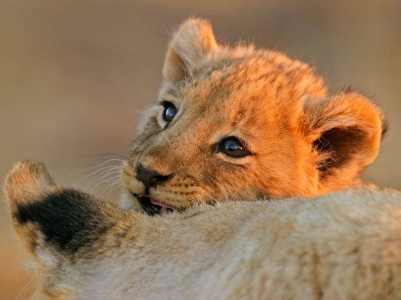 """""""Kuscheln ist natürlich auch sehr wichtig! Mama ist nämlich so schön weich!"""" – Bild: Shutterstock / EcoPrint"""