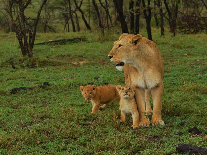 """""""Dann brauchen wir auch immer den Schutz unserer Mama!"""" – Bild: Shutterstock / buddy jenssen"""