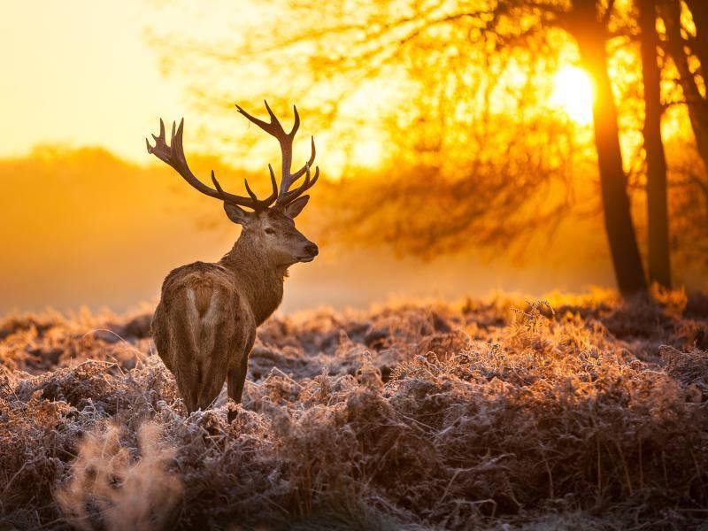 Mit einem tollen Schnappschuss dieser wundervollen Tiere endet diese Bildergalerie – Bild: Shutterstock / arturasker