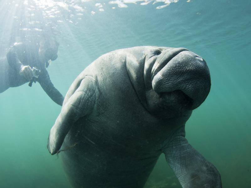 """""""Ich schwimme euch jetzt davon! Tschüss!"""" – Bild: Shutterstock / Shane Gross"""