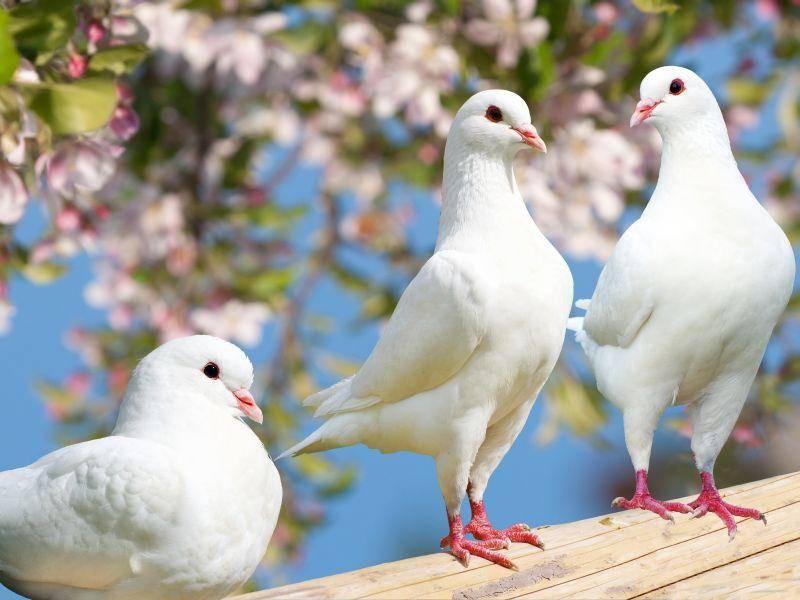 Drei hübsche Tauben-Freunde bei der Rast – Bild: Shutterstock / Daniel Prudek