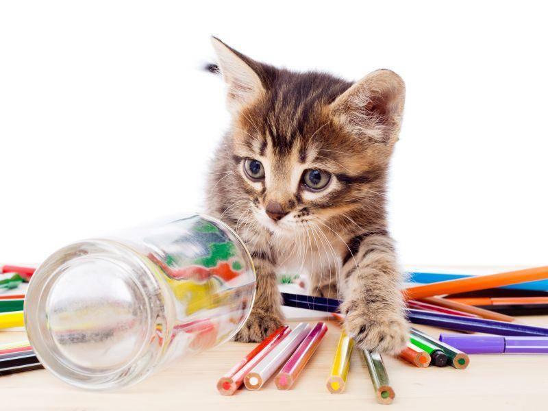 ... weil das Einzige, was besser ist, als ein bunter Stift, viele bunte Stifte sind – Bild: Shutterstock / Sergiy Bykhunenko