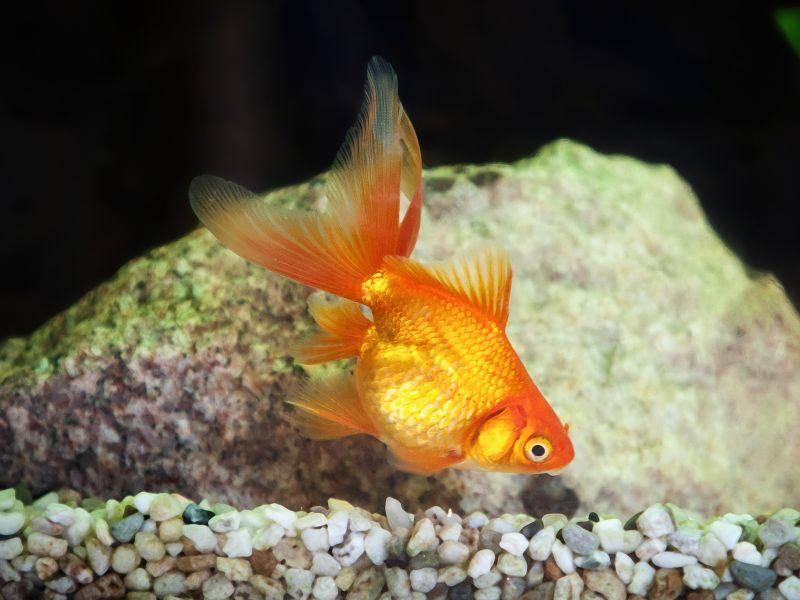 Verschiedene Wasserpflanzen, klassisches Fisch- und Lebenfutter gehören zu den Lieblingsspeisen der Fische – Bild: Shutterstock / dien