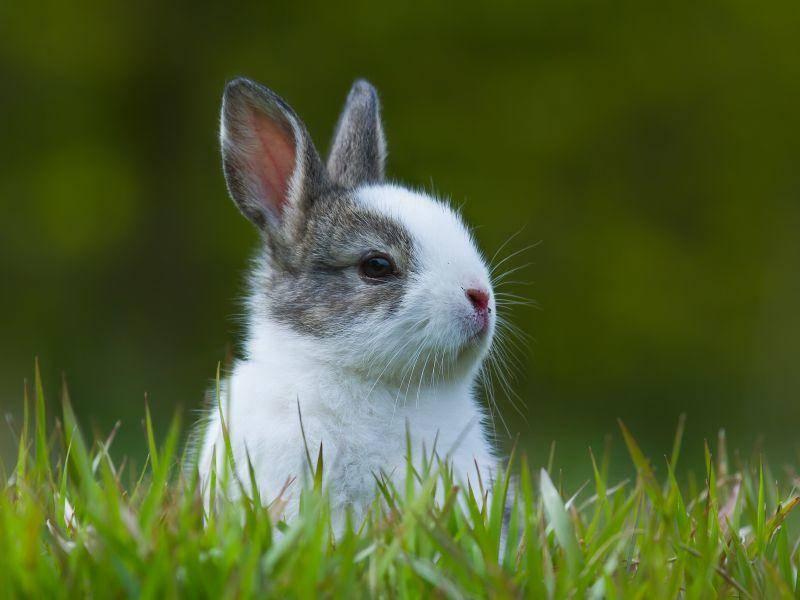Auch ein Salzleckstein und Knabbermöglichkeiten sind wichtig für Kaninchen – Bild: Shutterstock / Utopia_88