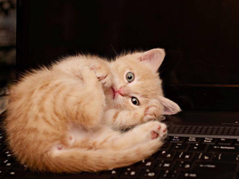 ... was an Schreibtischen so gemütlich ist? Natürlich der Laptop! – Bild: Shutterstock / Ortis