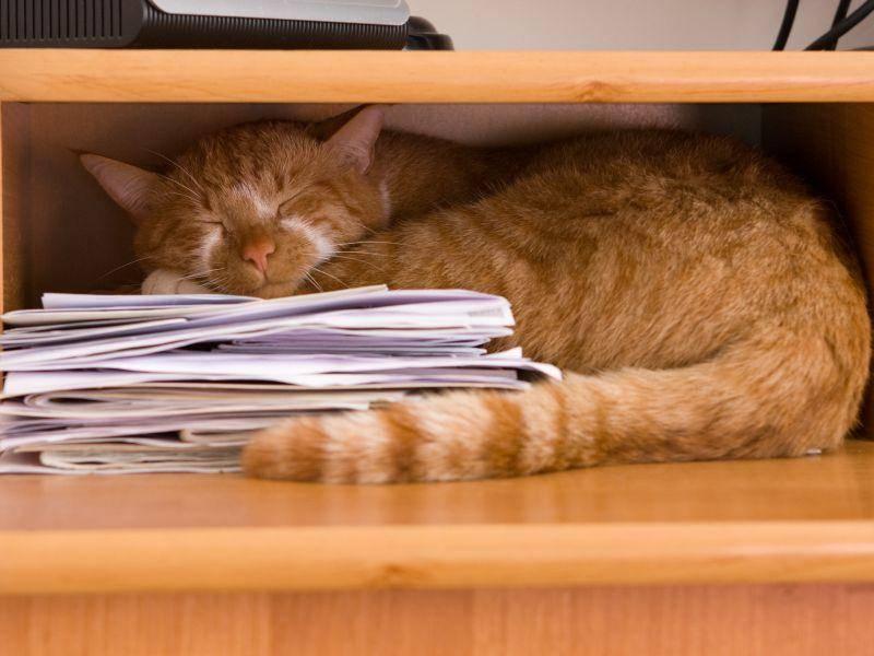 Weil man einfach so klasse auf Papier schlafen kann! Einfach so klasse! – Bild: Shutterstock / Renata Osinska