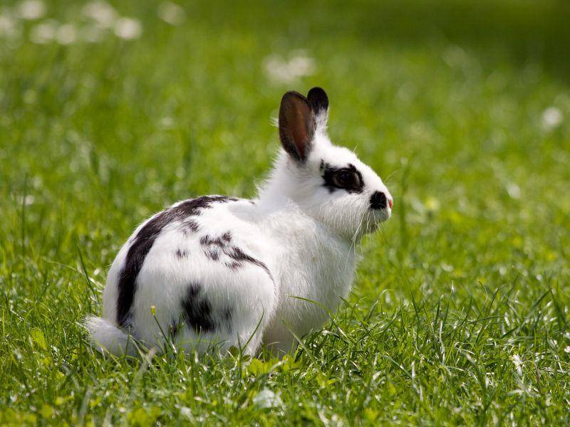 Kaninchen ernähren sich von Heu, Grünfutter, Trockenfutter und Wasser – Bild: Shutterstock / Zocchi Roberto