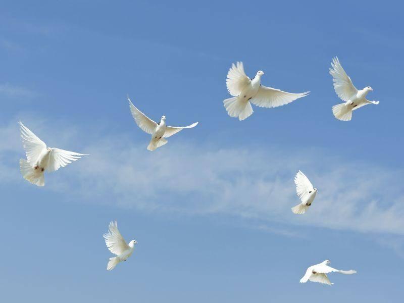 Weiße Tauben, blauer Himmel: Ein schönes Bild! – Bild: Shutterstock / Draw05