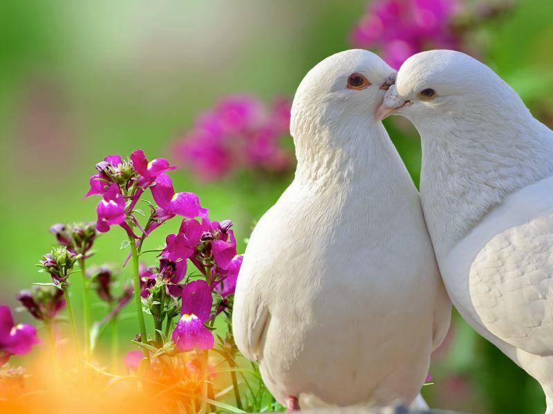 Und die letzten beiden in unsere Runde: Ein schönes Taubenpärchen – Bild: Shutterstock / Jack Q