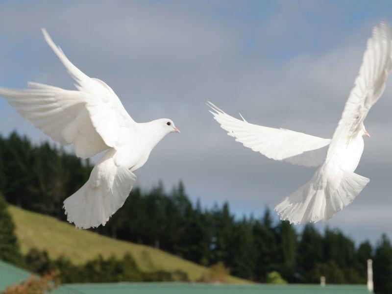 Ihr Flug sieht majestätisch aus – Bild: Shutterstock / Sue McDonald