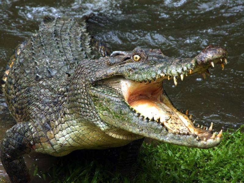 Und mit ihren scharfen Zähnen können sie einem einen großen Schrecken einjagen – Bild: Shutterstock / Audrey Snider-Bell