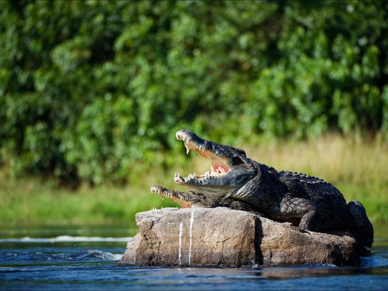 """""""Sehr interessant! Wir sonnen uns jetzt ein wenig! Tschüss!"""" – Bild: Shutterstock / Sergey Uryadnikov"""