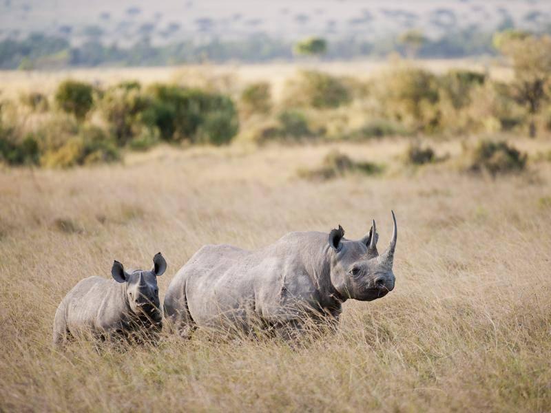 """""""Da sind meine Freunde. Dann verabschiede ich mich für heute. Bis bald vielleicht in der Savanne!"""" – Bild: Shutterstock / Photo Africa SA"""