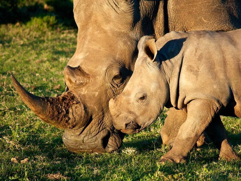 """""""Ungefähr zwei bis drei Jahre bleibt der Nachwuchs bei seiner Mutter."""" – Bild: Shutterstock / Steven Gill"""