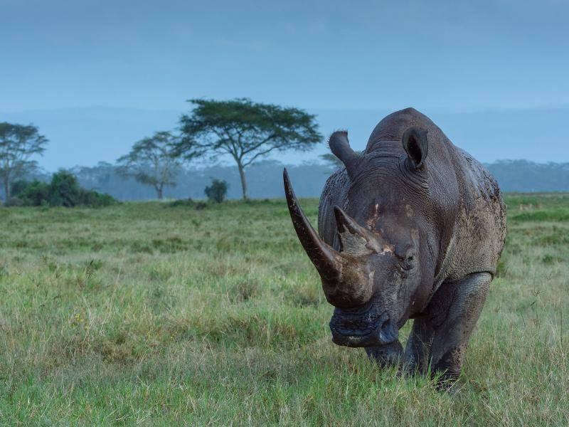 """""""Wir fühlen uns dann sowohl in tropischen Regenwäldern als auch Savannen wohl."""" – Bild: Shutterstock / costas anton dumitrescu"""
