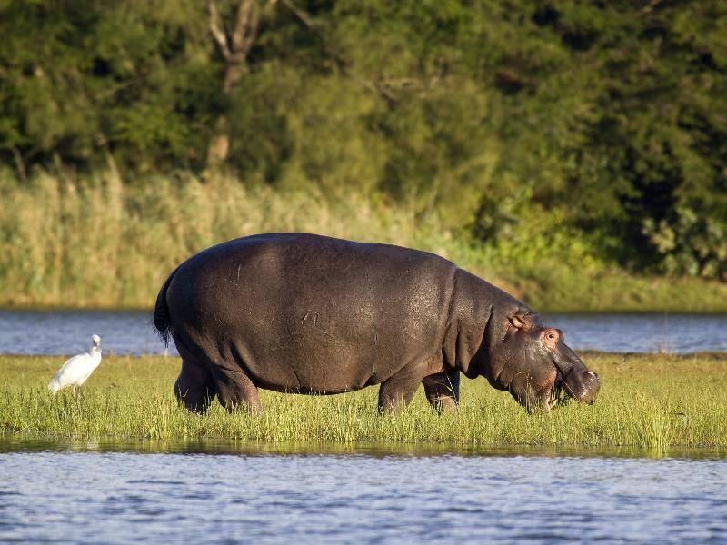 Für die Futtersuche müssen die Tiere dann aber doch an Land – Bild: Shutterstock / Leon Marais