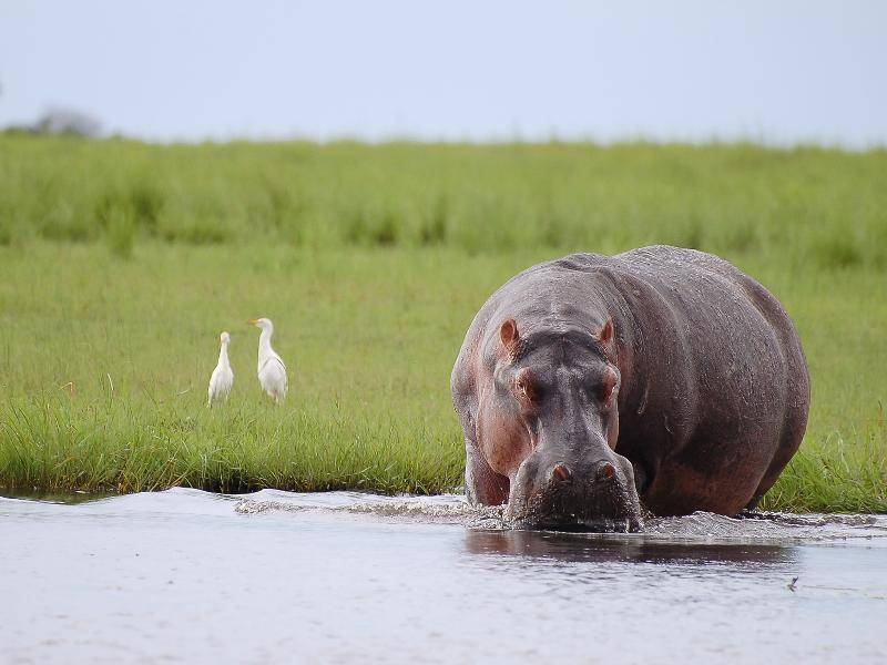 Und lassen es dann eher gemütlich und ruhig angehen – Bild: Shutterstock / Adwo