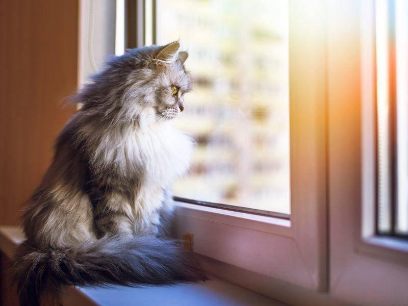 """""""Wenn ich einen spannenden Fensterplatz habe, habe ich alles toll im Blick!"""" – Bild: Shutterstock / lkoimages"""