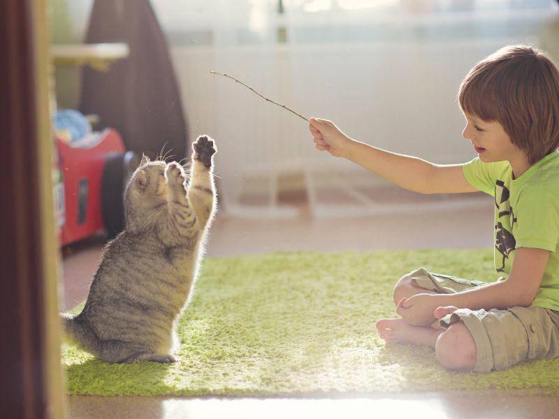 """""""wenn mein Lieblingsmensch sich mit mir beschäftigt, langweile ich mich nie!"""" – Bild: Shutterstock / Photohota"""
