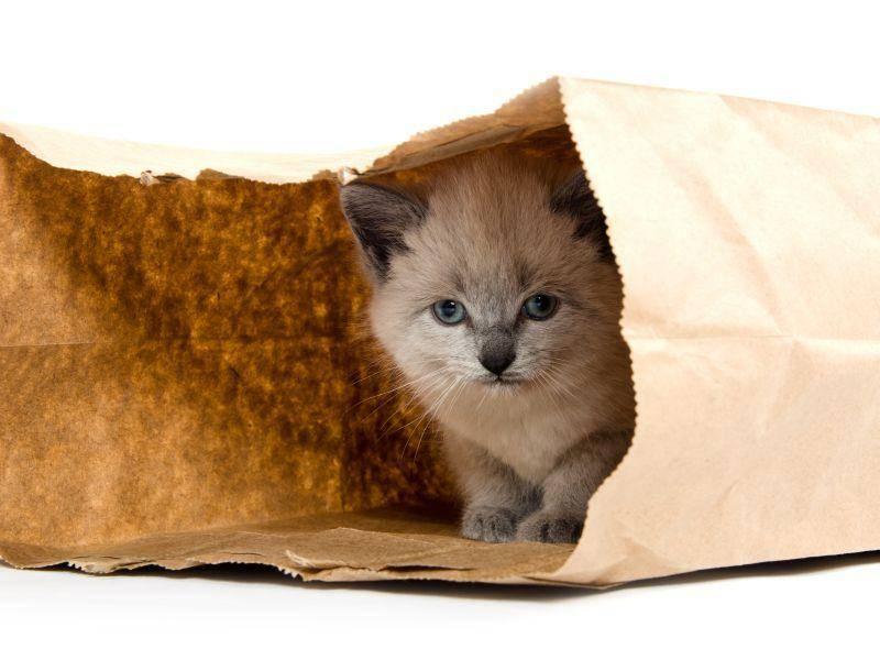 """""""Wusstet ihr, wie spannend es für Katzen ist, sich in Papiertüten zu verstecken?"""" Na klar, kleine Miez! – Bild: Shutterstock / Tony Campbell"""