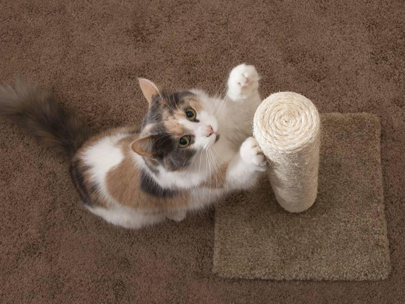 """""""Und ich liebe es, mir die Krallen zu schärfen. Am besten in jedem Zimmer!"""" – Bild: Shutterstock / Lenkadan"""