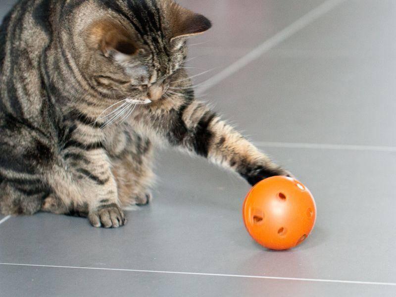 """""""Mit einem Snackball zu spielen macht Spaß wenn Frauchen und Herrchen nicht da sind – Bild: Shutterstock / Anna Morgan"""