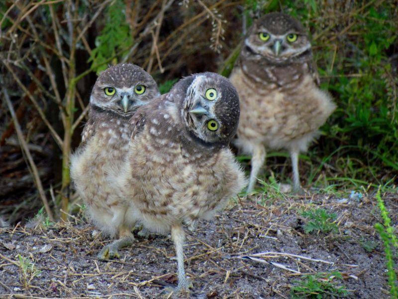 """""""Guckt mal, ich kann auf einem Bein stehen!"""" Auch unter Eulenbabys gibt es kleine Spaßvögel – Bild: Shutterstock / Gina Hendrick"""