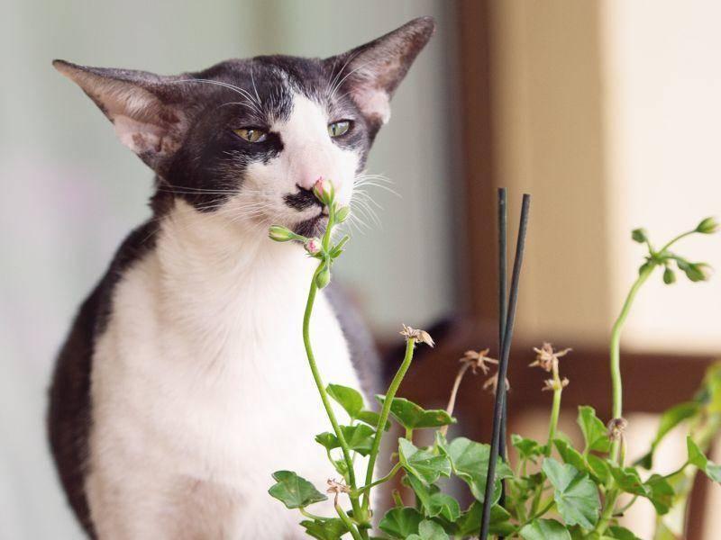 Verspielt und neugierig: Diese Katze muss alles genau erkunden – Bild: Shutterstock / otsphoto