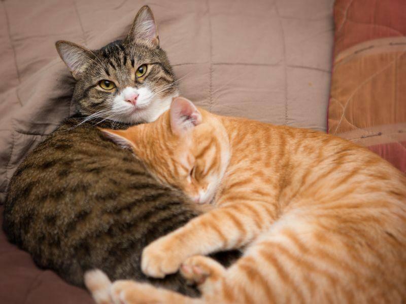 """""""Und wisst ihr, wie uns fast nie langweilig wird? Wenn wir zusammen mit einem tollen Kumpel gehalten werden."""" – Bild: Shutterstock / SaNa"""