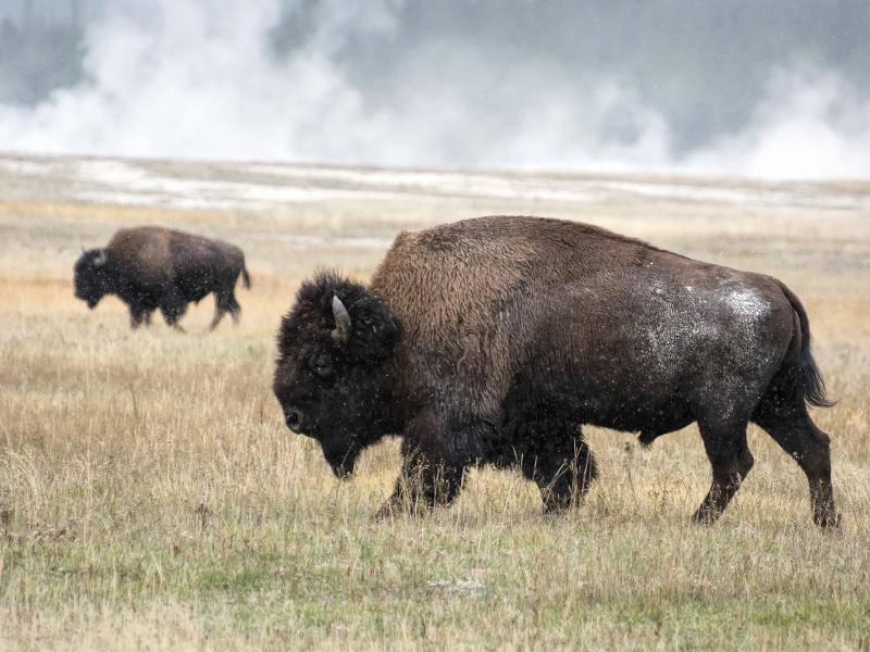 Damit sie groß und stark bleiben, nehmen sie pflanzliches Futter zu sich, Fleisch jedoch gar nicht – Bild: Shutterstock / Philip Bird LRPS CPAGB