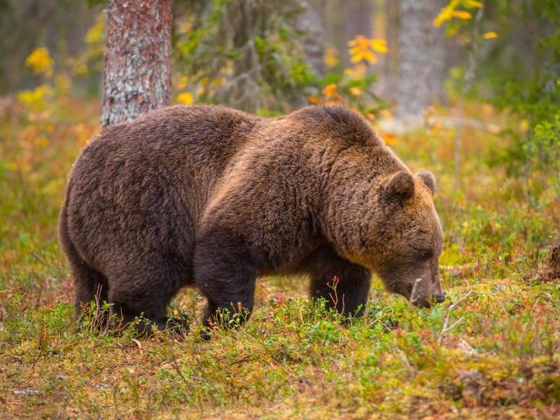 Dort leben sie beispielsweise in Wäldern, Küstenregionen oder auf Bergwiesen – Bild: Shutterstock / Tom linster