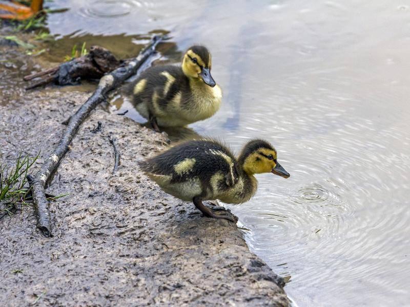 """""""Gleich geht es ab ins Wasser. Ich bin schon startklar!"""" – Bild: Shutterstock / Greir"""