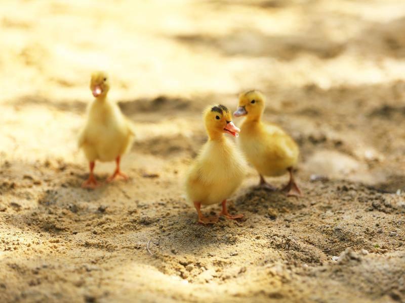 """""""Auf Sand zu laufen macht schließlich Spaß!"""" – Bild: Shutterstock / Africa Studio"""