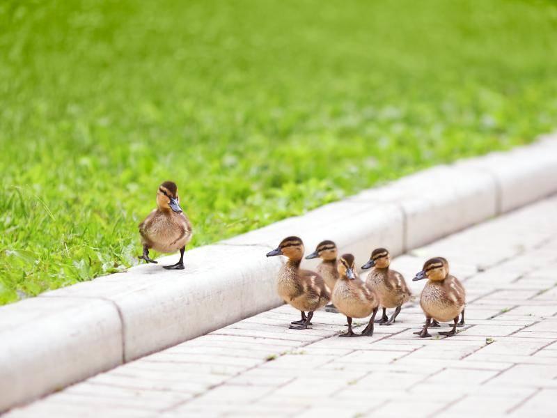 Oder die Aussicht zu genießen – Bild: Shutterstock / ILYA AKINSHIN