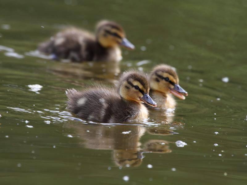 """""""Wir sind schon drin!"""" – Bild: Shutterstock / Vlasta Kaspar"""