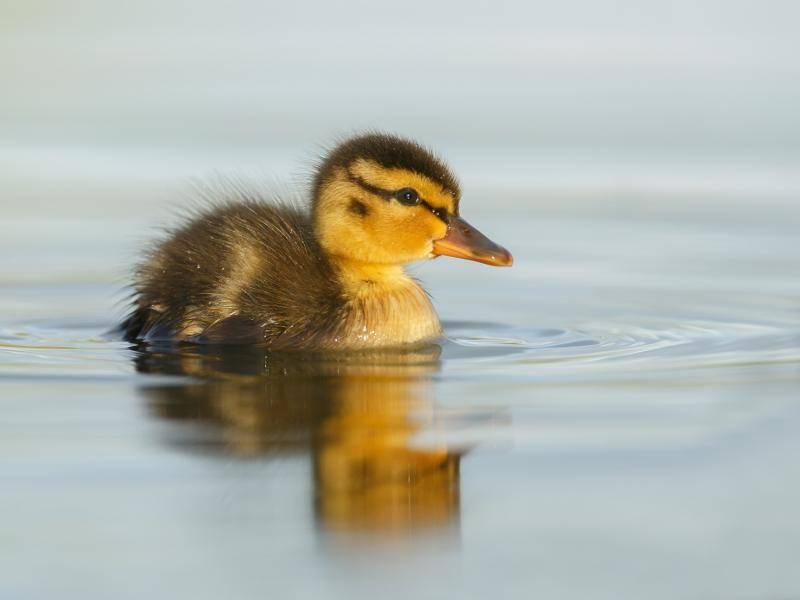 Dieses Kerlchen hat es bereits geschafft – Bild: Shutterstock / Menno Schaefer