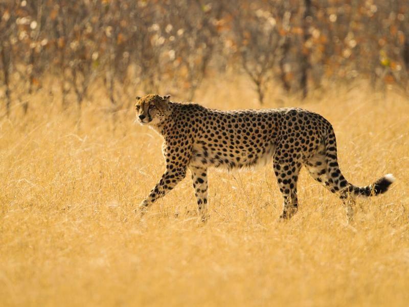 Diese Tiere sind außerdem hauptsächlich in Savannen anzutreffen – Bild: Shutterstock / Jez Bennett