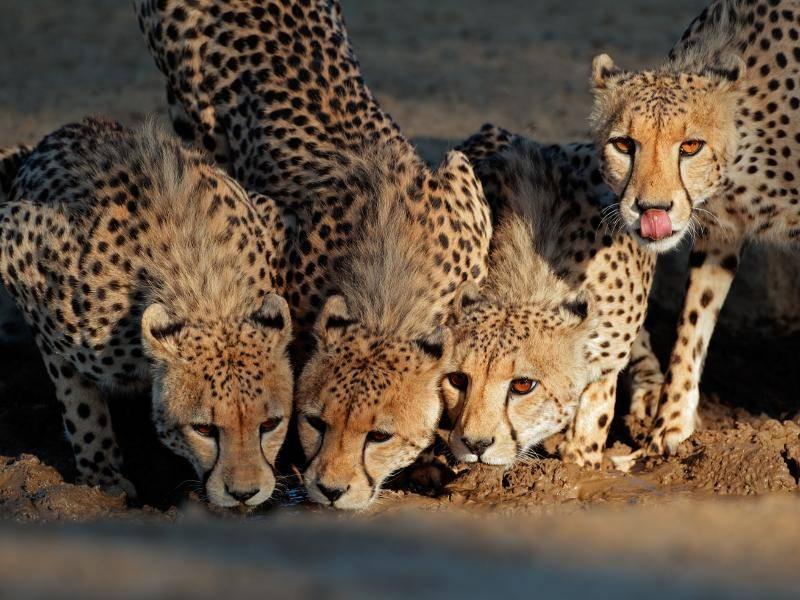 Und werden in der freien Natur im Schnitt acht Jahre alt – Bild: Shutterstock / EcoPrint
