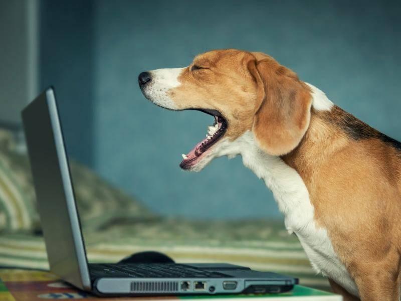 """""""So, lang genug am Laptop gesessen. Jetzt wird eine Runde geschlafen!"""" – Bild: Shutterstock / Soloviova Liudmyla"""
