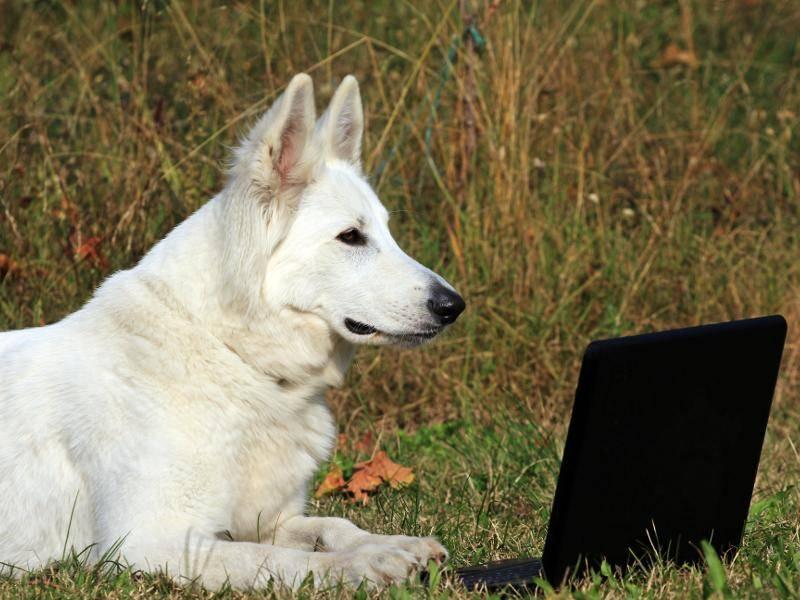 """""""Und ich sonne mich gerne, während ich vor dem Laptop liege!"""" – Bild: Shutterstock / Marcella Miriello"""