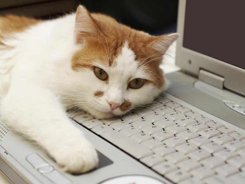 """""""Mit dem warmen Laptop kuscheln, das ist schön!"""" – Bild: Shutterstock / nelu stamate"""