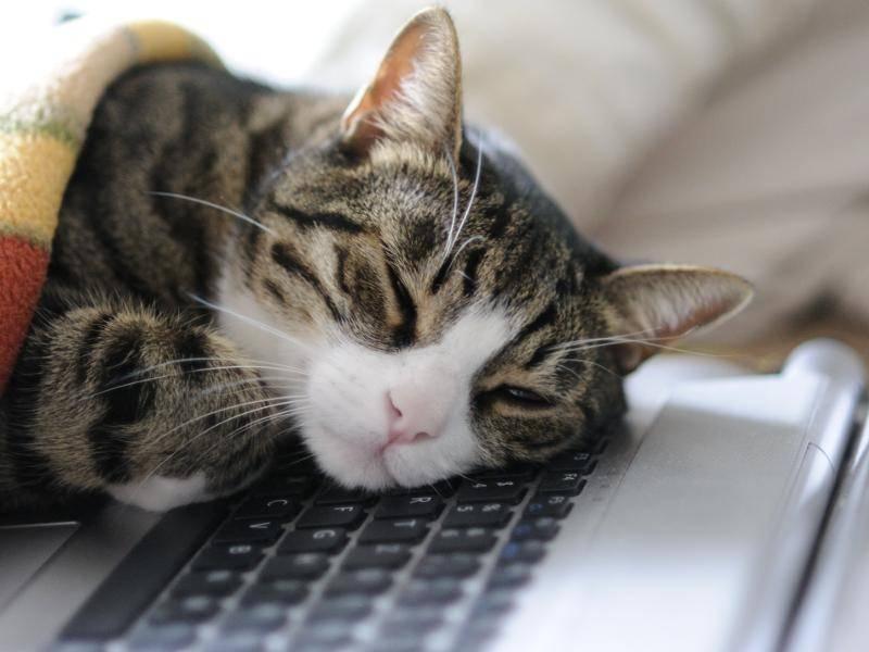 Schlafen geht natürlich auch – Bild: Shutterstock / Eric Fahrner