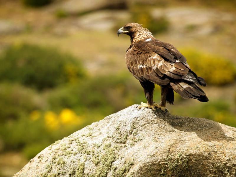 In Fels- und Waldgebieten fühlen sich diese anmutigen Tiere heimisch – Bild: Shutterstock / Mark Caunt