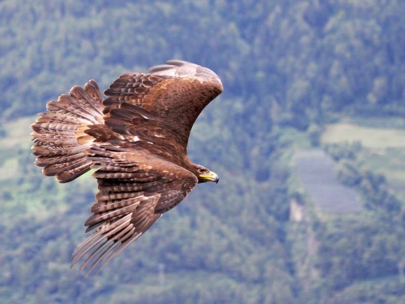 Wenn Seeadler auf Jagd gehen, dann überraschen sie ihre Beute gerne... – Bild: Shutterstock / Bildagentur Zoonar GmbH