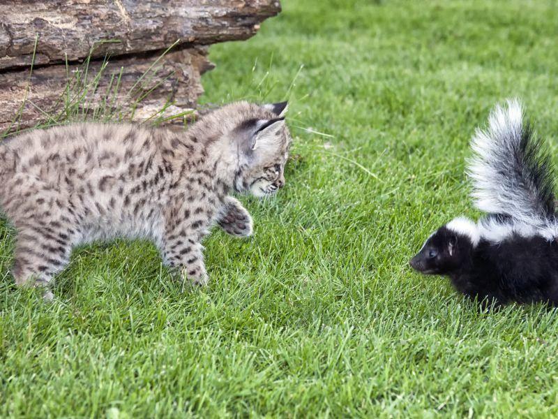 Und auch seltsame Begegnungen bleiben dann nicht aus. Wie spannend! – Bild: Shutterstock / Critterbiz