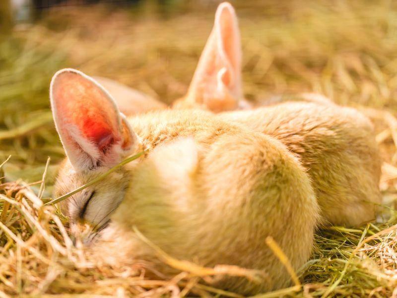 Die Jungtiere bleiben etwa ein Jahr lang bei ihren Eltern – Bild: Shutterstock / Ohm2499