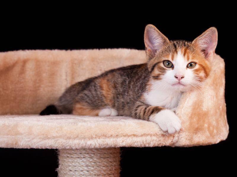 """Na ihr?"" Na, süßes Katzenbaby? – Bild: Shutterstock / Lenkadan"